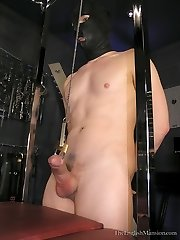 Pierced Cock Handjob