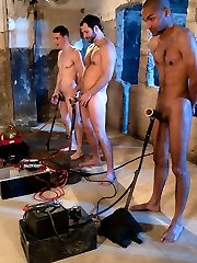 Three new pledges desperately want training by Maitresse Madeline and The Divine Bitches. These...