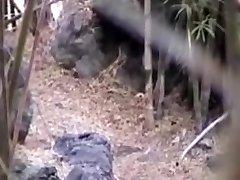 poke in the woods