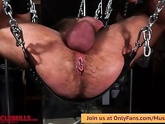 BIG MUSCLE BULL ON SLING WITH WRECKED HOLE FROM A Fine Dick & DILDO FUCKING