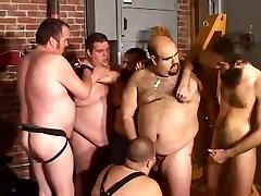 דוב מסיבה