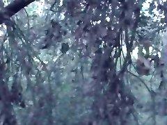 Panique dans les bois