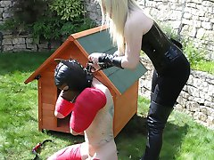 Pet Puppy Training