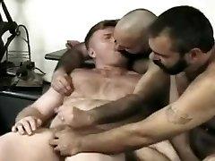 3 de Osos