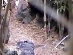smash in the forest