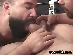 Gay bears pumping iron and sucking cock part2