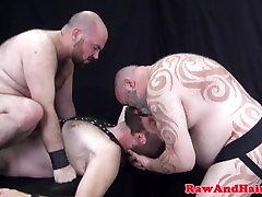Chubby bears bareback buttfucked